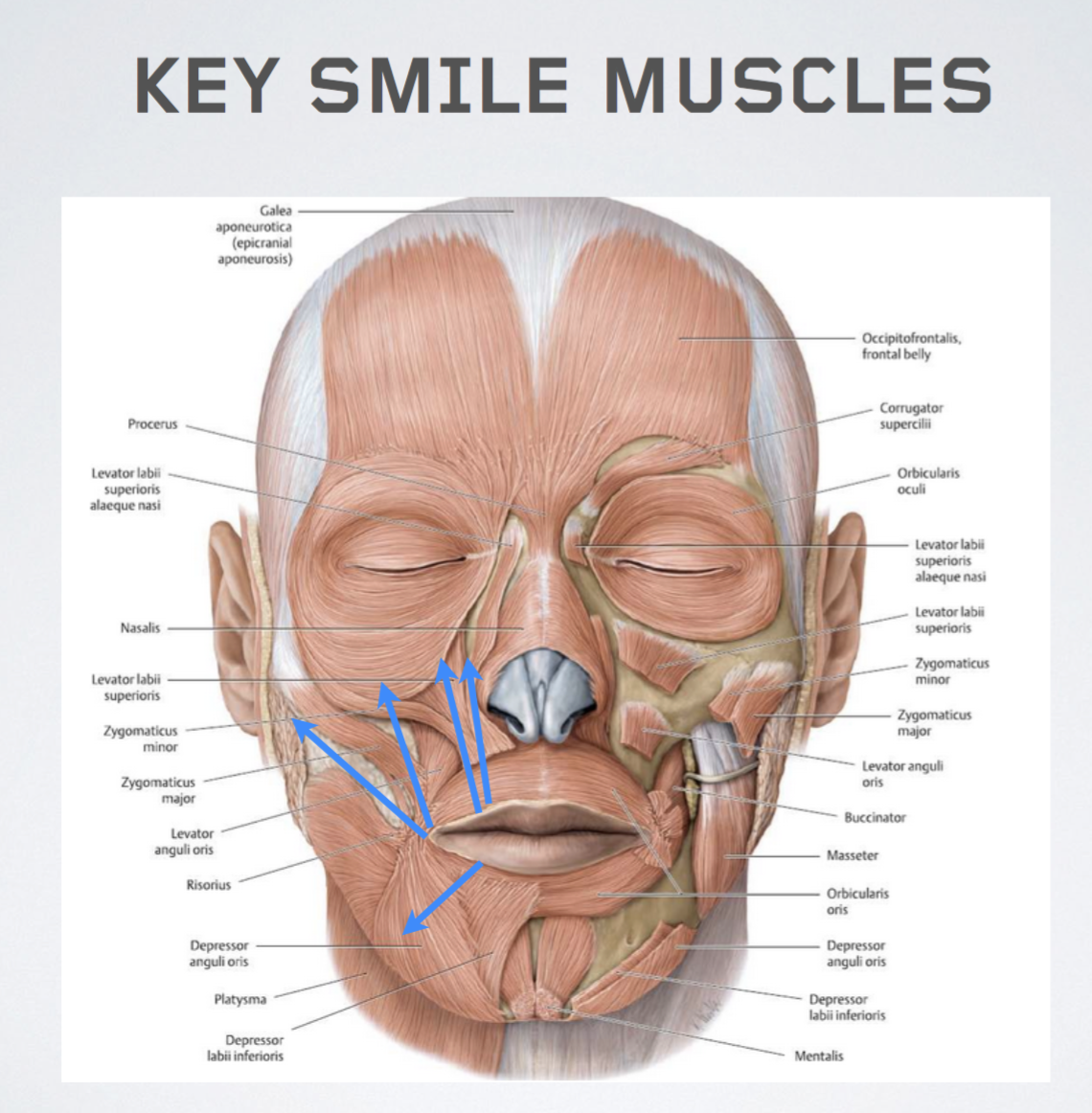 The Anatomy of a Smile and Facial Synkinesis